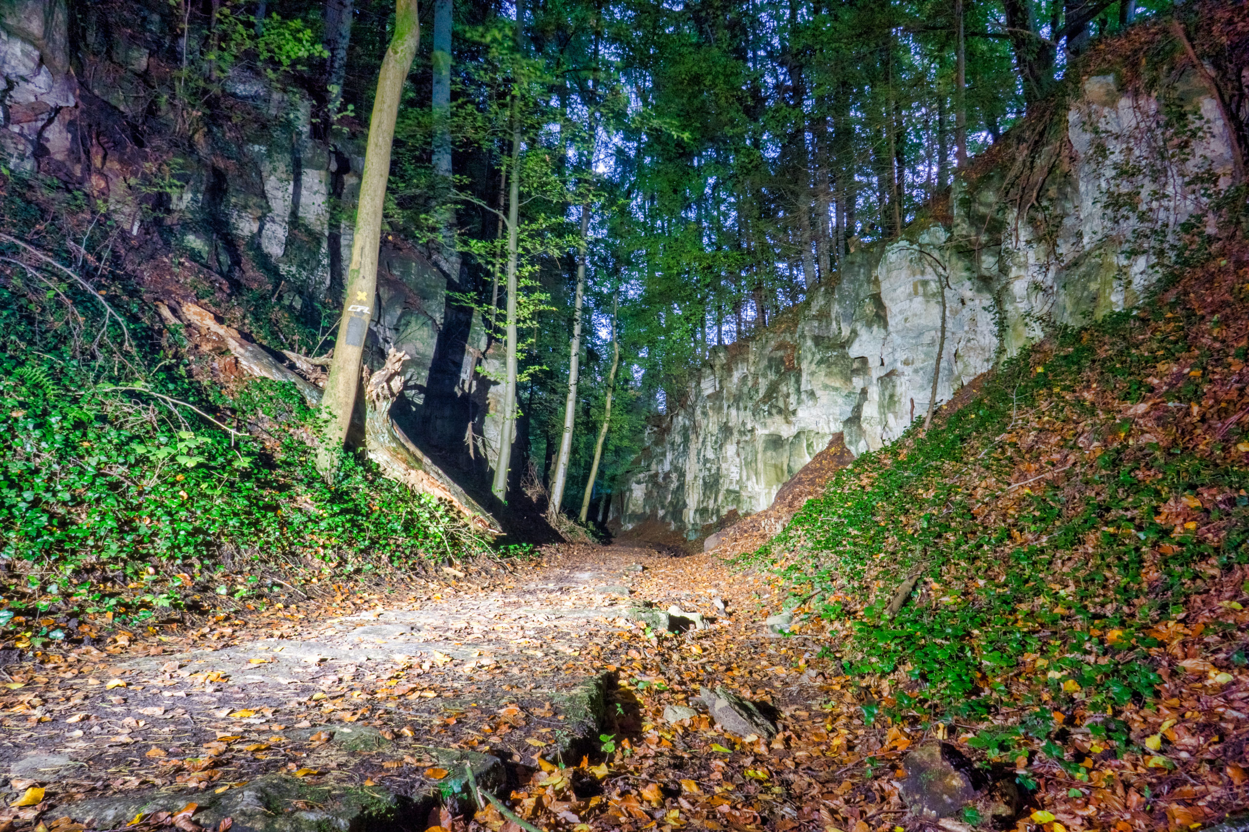 Canyon In Sentier De L'Alzette